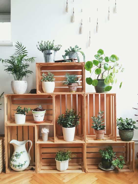 take care of indoor plants XII
