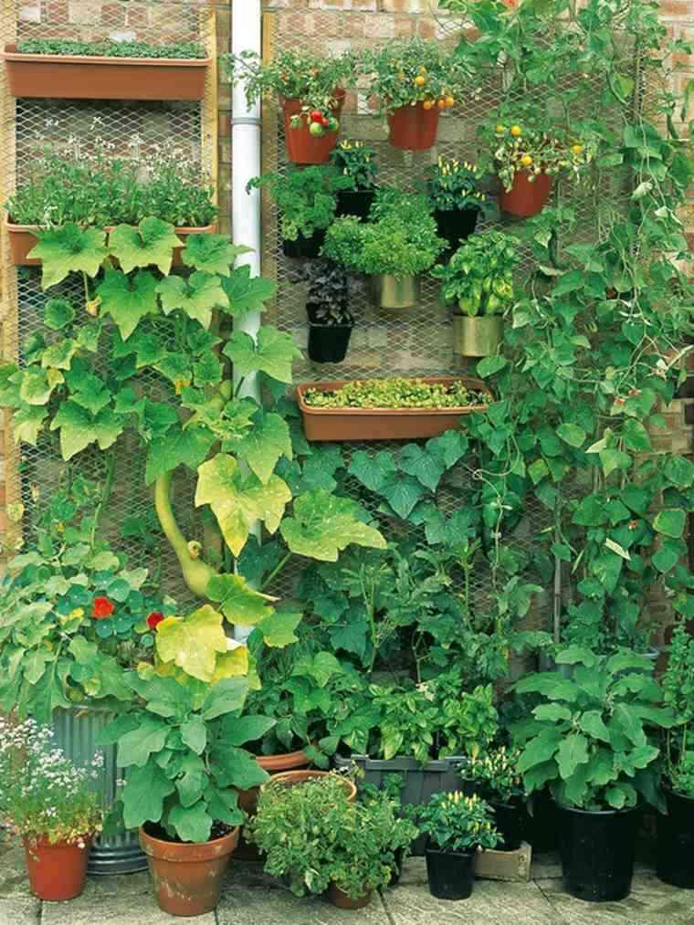 Huerto urbano - cultivos sencillos