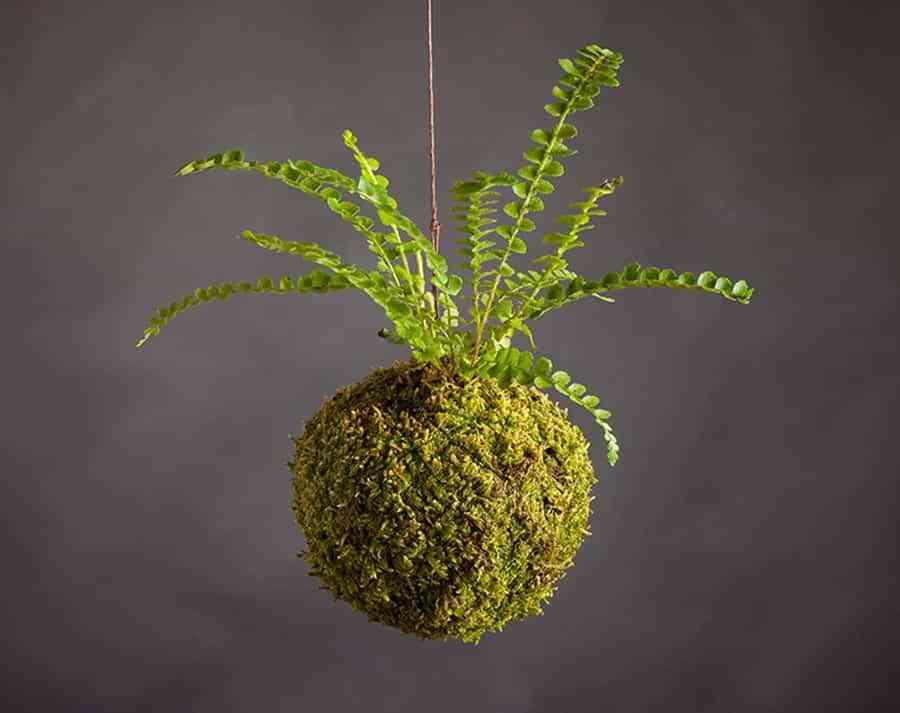 Kokedama o cómo decorar la casa con plantas sin maceta