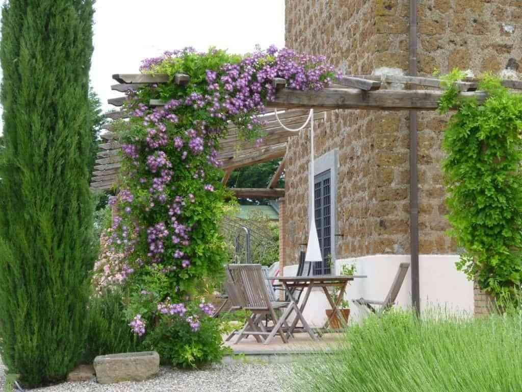 Plantas trepadoras con flores para cultivar en tu jardín