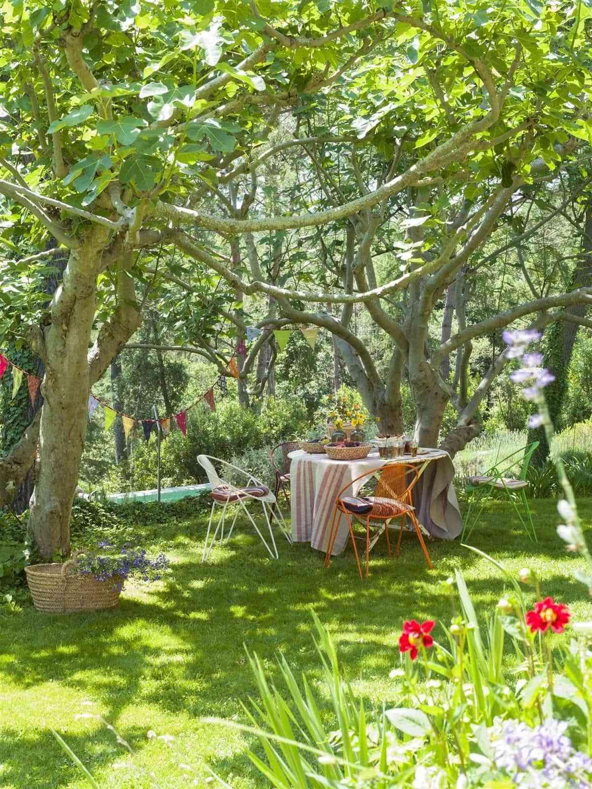 Árboles para jardín: consejos para su mantenimiento y poda