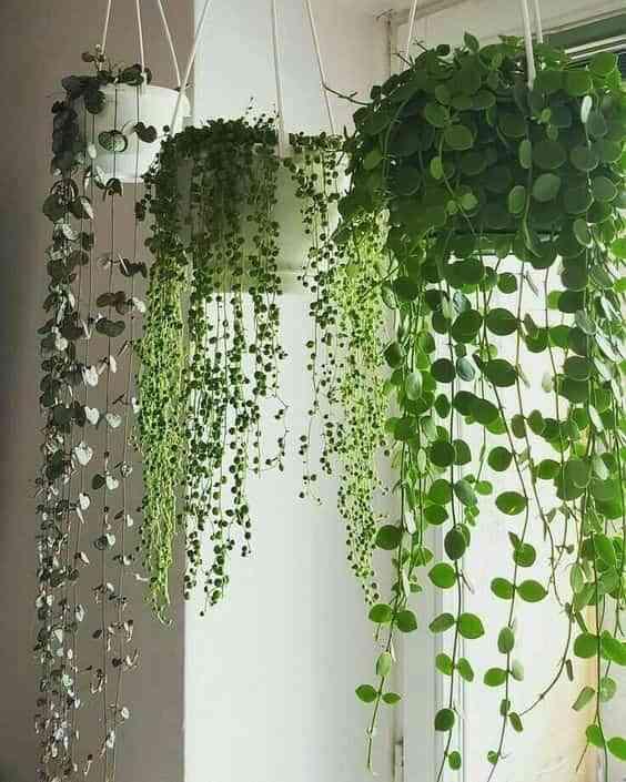 10 formas de decorar con plantas colgantes perfectas para tu hogar