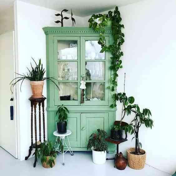 decorar con plantas colgantes VII