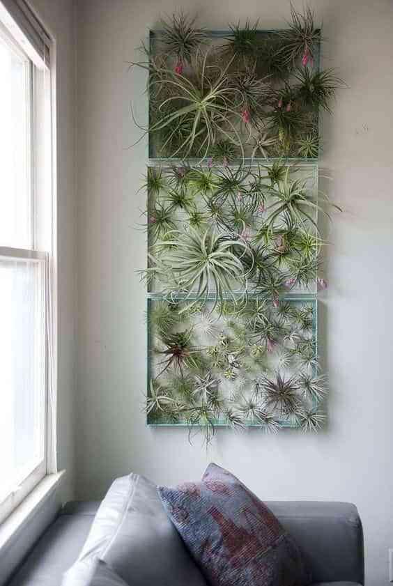 Plantas aéreas. 10 ideas para decorar en interior con ellas