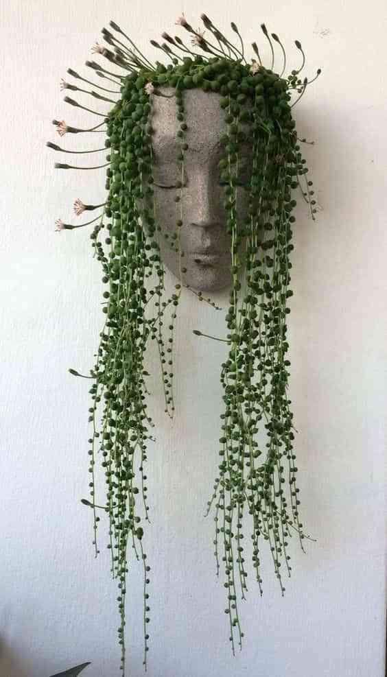 decorar con plantas colgantes en casa II