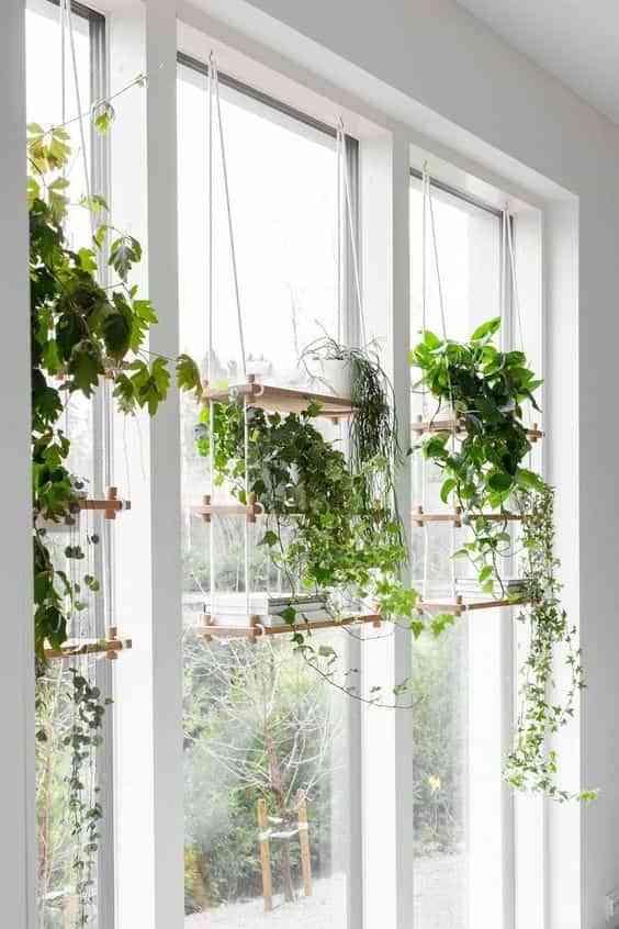 decorar con plantas colgantes V