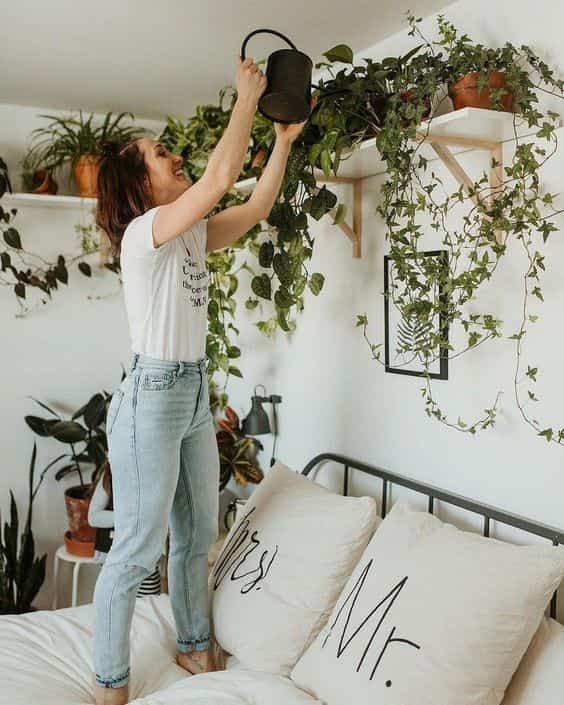 decorar con plantas colgantes VI