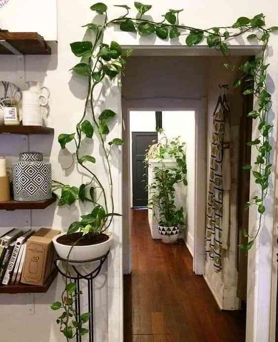 decorar con plantas colgantes VIII