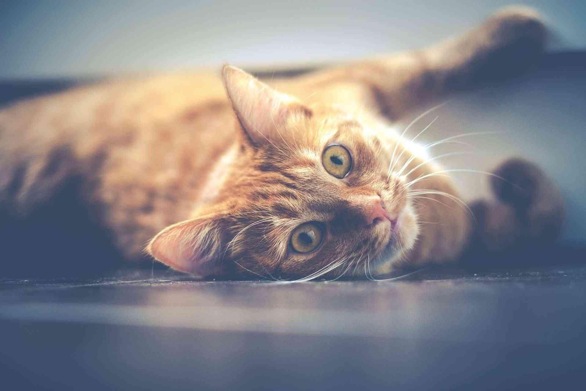 suelos para mascotas