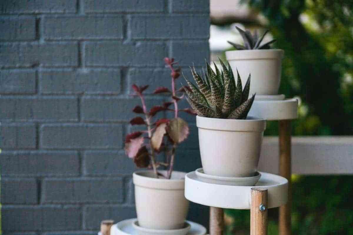 aloe vera planta para interior