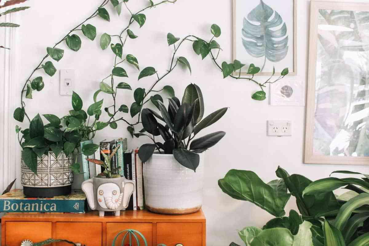 decorar paredes con cuadros de hojas
