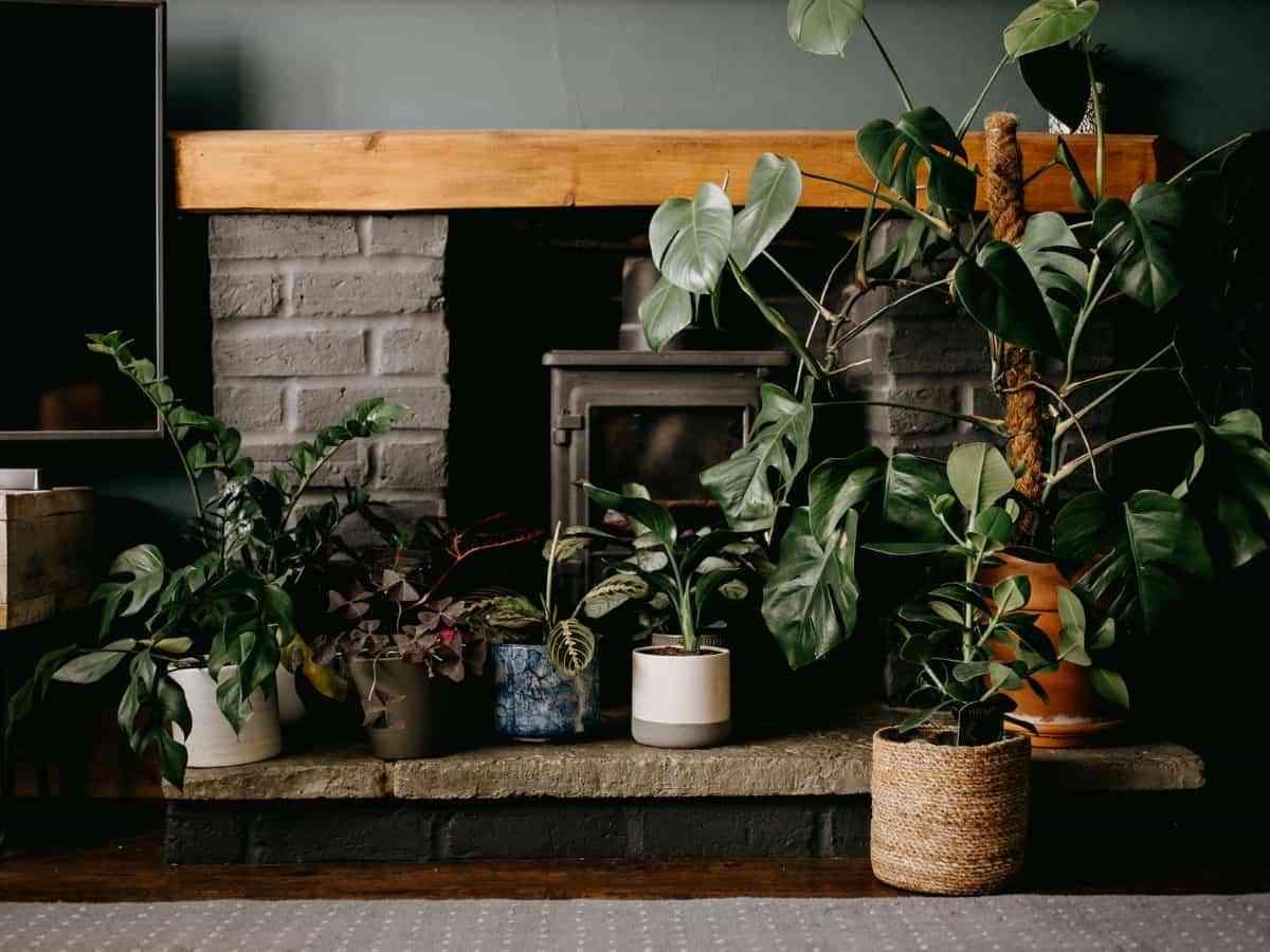 plantas para refrescar y purificar el hogar