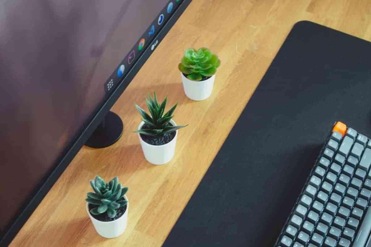 plantas de interior para decorar