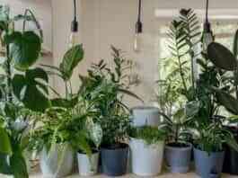 plantas para refrescar el hogar