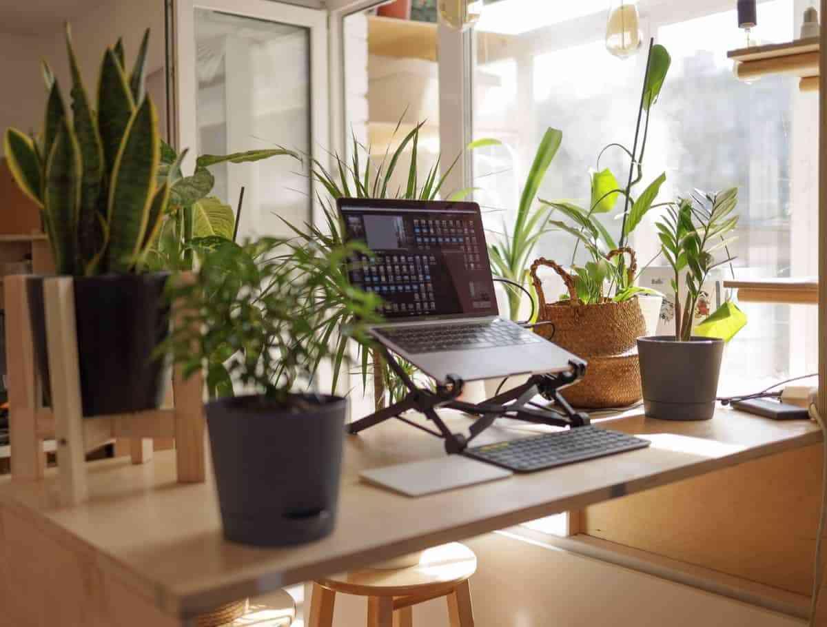 refrescar el hogar y sus estancias con plantas
