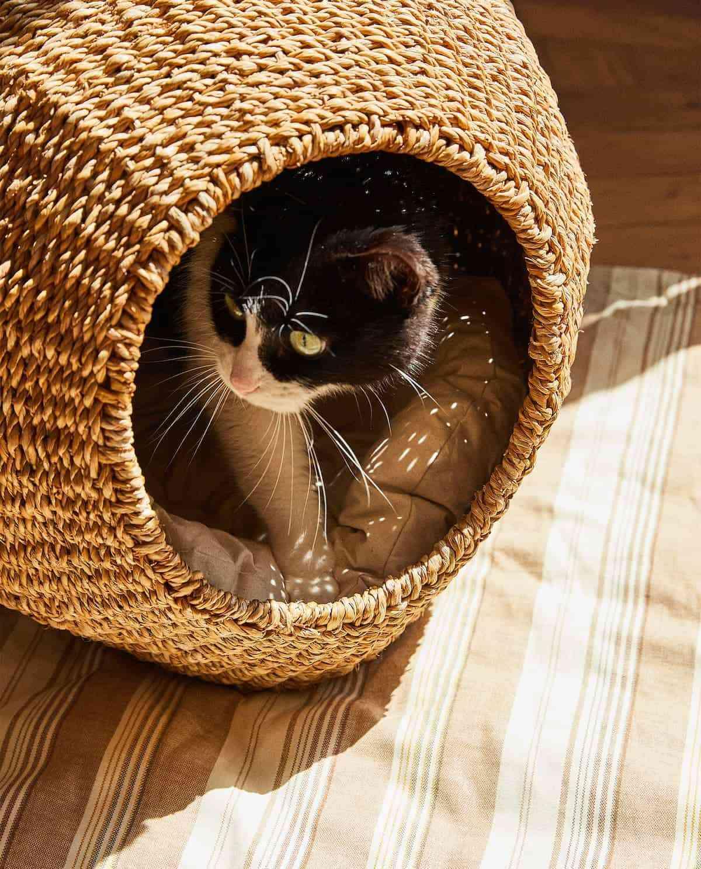 cestas para mascotas pequenas zara home