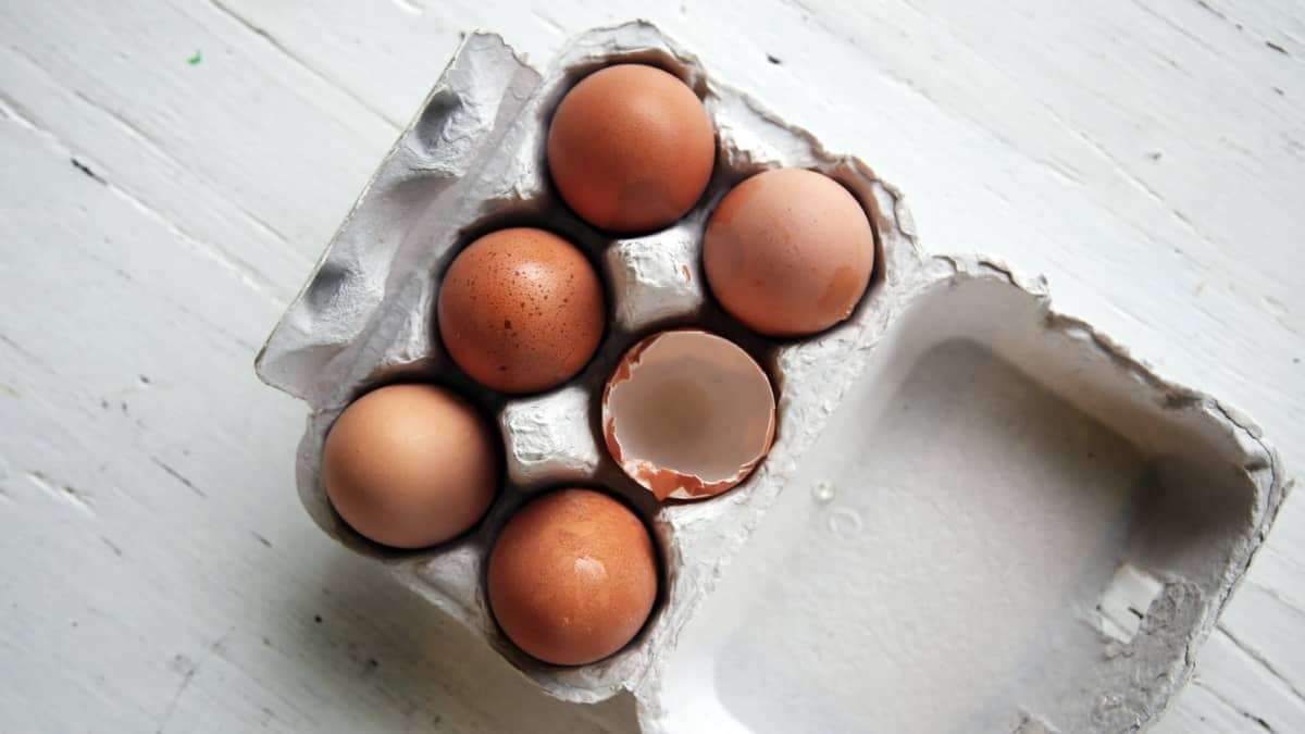 fertilizante casero con cascaras de huevo