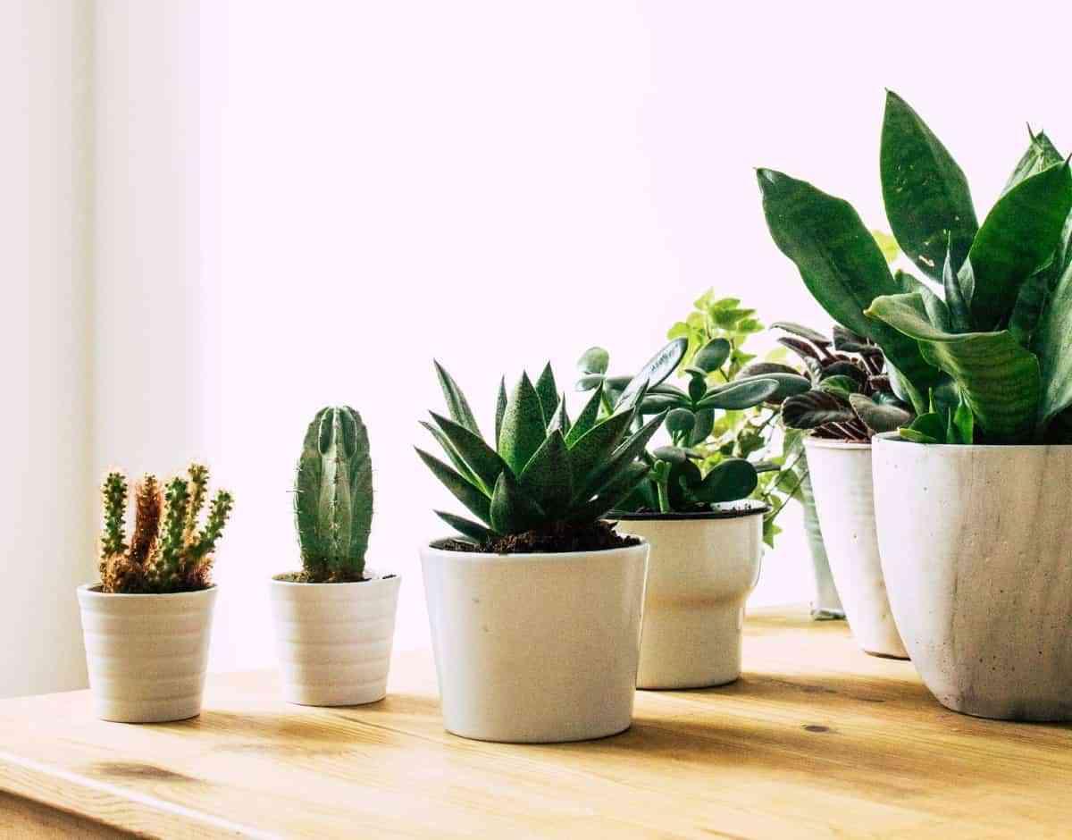 5 fertilizantes caseros para tener las plantas más saludables