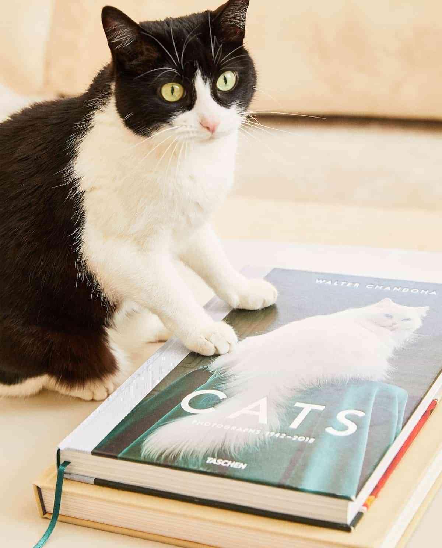 libros sobre gatos en zara home