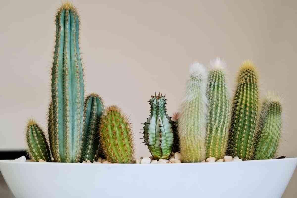 como cuidar los cactus invierno
