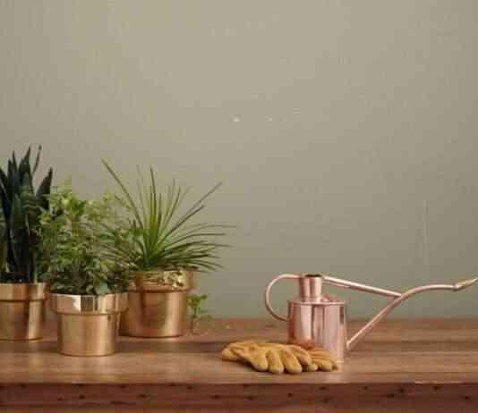 cuidado de las plantas de interior
