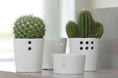 Decorar con cactus decoraci n de interiores opendeco for Cactus cuidados exterior