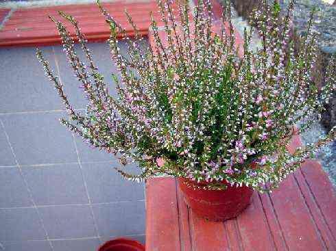 Decorar con arbustos decoraci n de interiores opendeco - Arbustos de interior ...