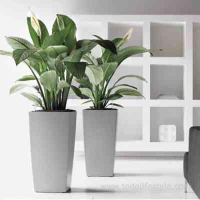 Maceteros para la casa decoraci n de interiores opendeco for Plantas de interior altas
