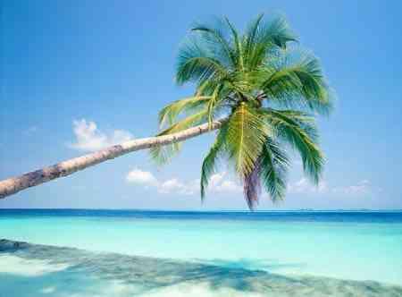 palmera.jpg