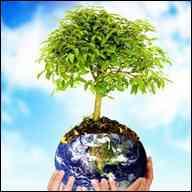 cuidado-medio-ambiente