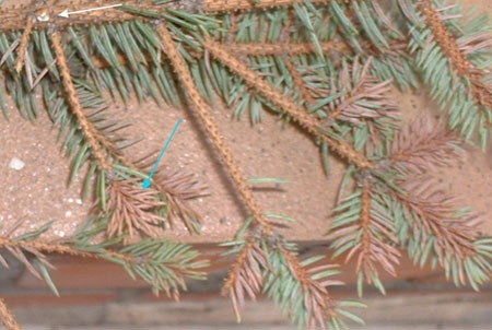 abeto_arbol_navidad_cortar_ramas_hojas
