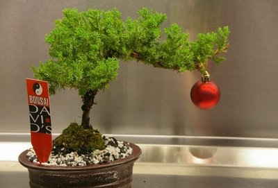 bonsai_arbol_navidad_3