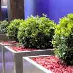 Decorando jardines con Earth Designs 5