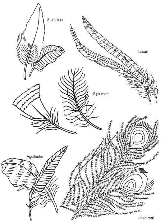 De Plumas De Pato Silvestre Y Aguilucho Plumas De Pavo Real Y Plumas