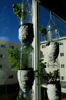 windowfarms_project_hidroponia_2