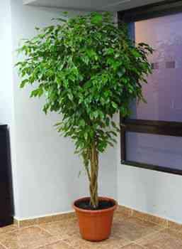 Decora con plantas de interior parte 1 decoraci n de for Plantas grandes de interior resistentes