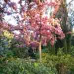 Jardinia: la solución para tu jardín 7