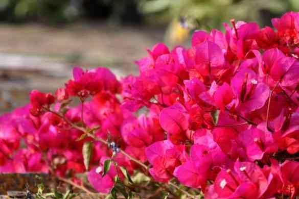Decora tu jardín con flores y muchos colores 2