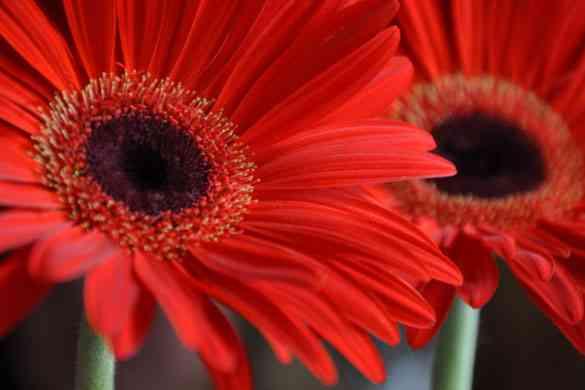 Decora tu jardín con flores y muchos colores 3