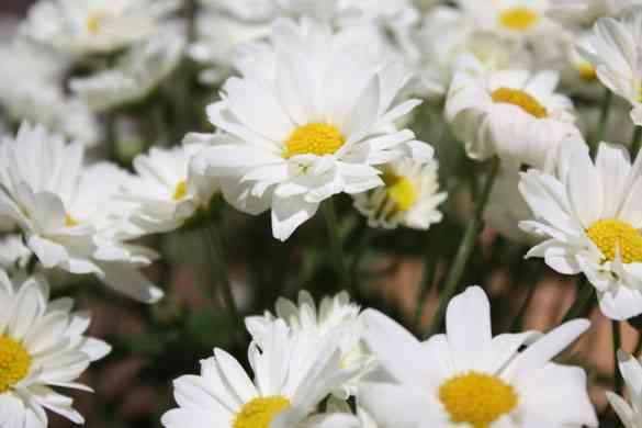 Decora tu jardín con flores y muchos colores 5