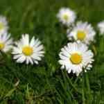 primavera-incipiente