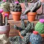 Cactus tejidos de Gerard Shannon 6