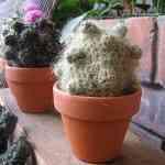 Cactus tejidos de Gerard Shannon 4