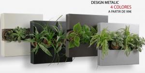 Si tienes una pared tienes sitio para una planta 4