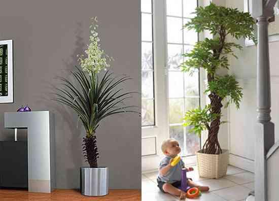 Decorar con plantas 1