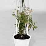 Plantable, una mesa a la que le crece la naturaleza de Jailmake 2