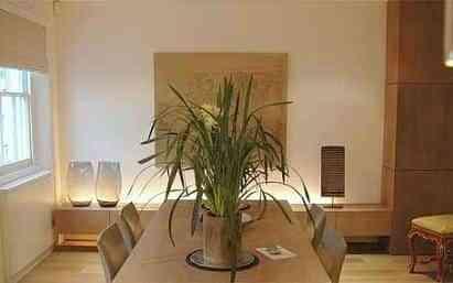Plantas naturales para tu hogar decoraci n de interiores for Decoracion de casas con plantas naturales