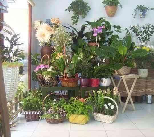 Plantas para decorar 1