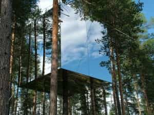 Viviendo en la copa de los árboles 1