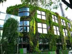 Jardines verticales: plantas en tus paredes 1
